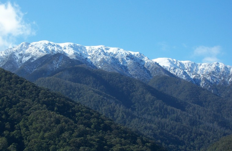 Bogong from Ropers Lookout
